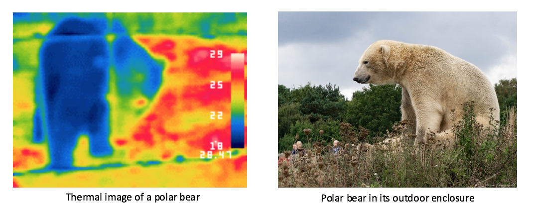 polar bear outdoors