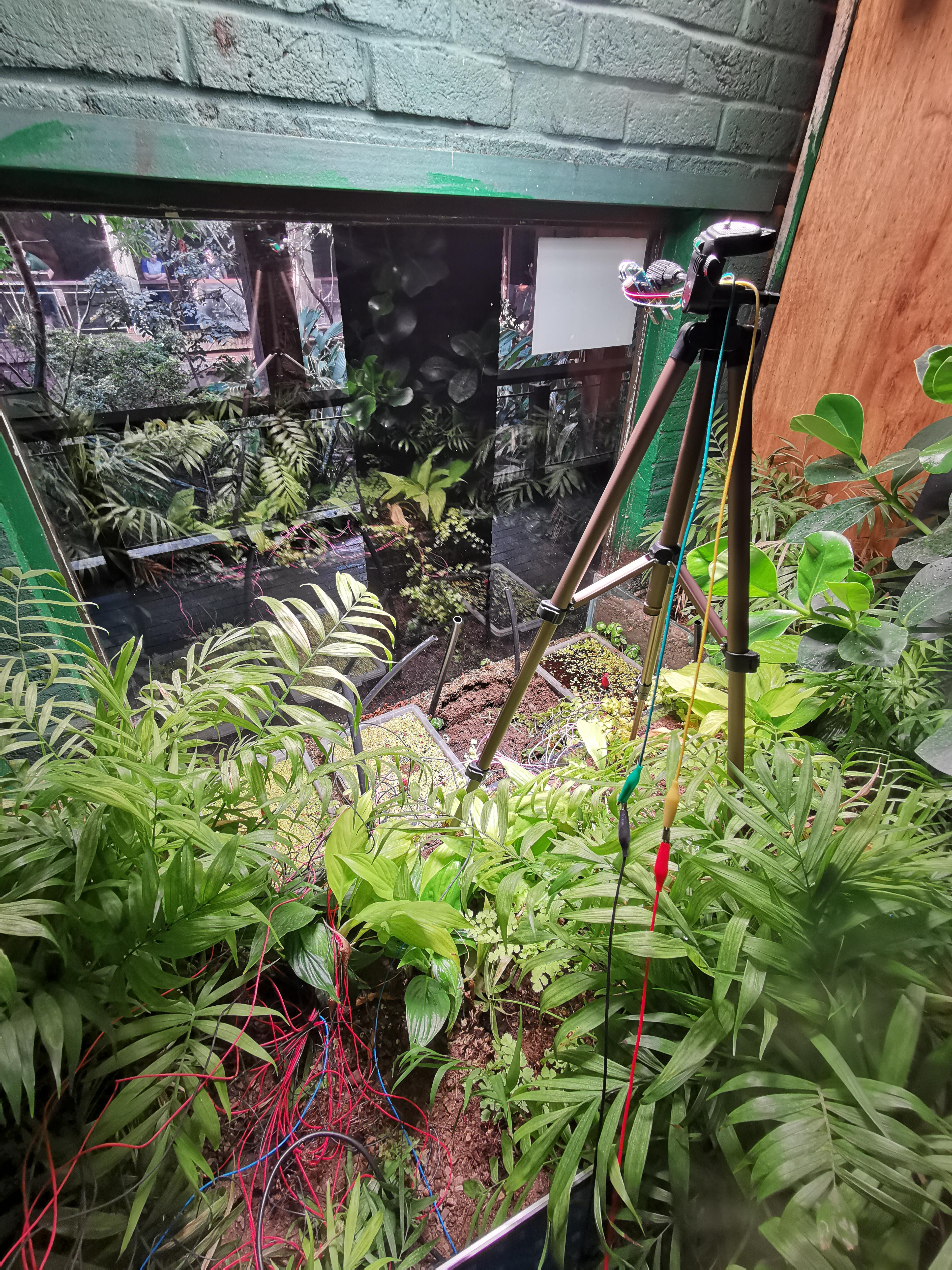 A visitor to ZSL's Rainforest Live gazes through the window at Plant-E's microbial fuel cells and Xnor.ai's energy harvesting camera