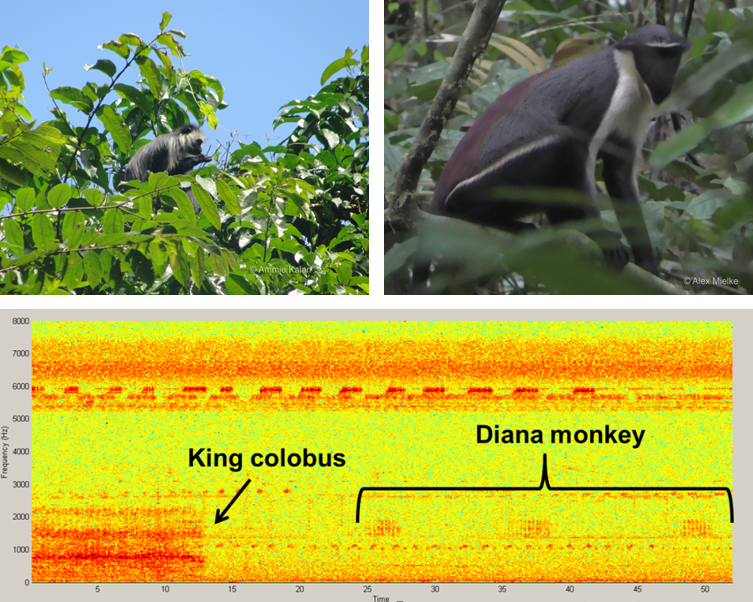 primate vocalisations