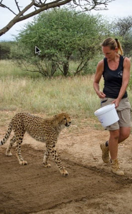 FIT Cheetah research
